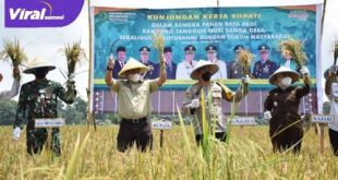 Bupati Muba Dr Dodi Reza Alex Noerdin Lic Econ MBA Panen Raya Padi Kampung Tangguh Musi, Sanga Desa. FOTO : VIRALSUMSEL.COM