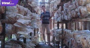 Gerry Castilo pembudidaya jamur tiram yang berada di Desa Senabing, Kabupaten Lahat. Foto : viralsumsel.com/oki