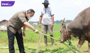 Bupati Dr Dodi Reza Alex Noerdin Lic Econ MBA memastikan kondisi kesehatan hewan kurban di wilayah Muba, Minggu (4/7/2021). Foto : viralsumsel.com/devi