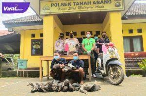 S dan A warga Payuputat Kota Prabumulih diamankan tim Tapak Rimau Polsek Tanah Abang PALI, Rabu (8/9/2021). Foto : viralsumsel.com/eko