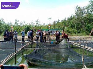 Kolam peternakan lele Kelompok Tani Mega Pro di Desa Persiapan Toman Baru Kecamatan Babat Toman melakukan panen perdana, Jumat (1/10/2021). Foto : viralsumsel.com/devi